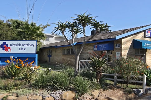 johannesburg-northriding-olivedale-veterinary-clinic-03